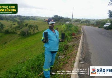 SÃO FELIPE; Secretaria de Agricultura faz plantio de Árvores pela cidade